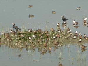 Birds at weland park