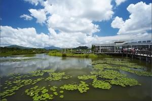 hong kong wetland pond